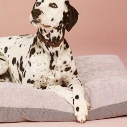 Duo cuscino cuccia per cane...