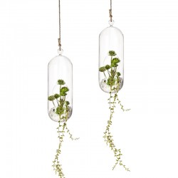 Set 2 Suspended Vase in glass - Terrarium