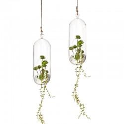 Set 2 Vasi in vetro sospesi - Terrarium