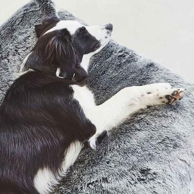 Amici a 4 zampe | Articoli Animali Online | ISA Project