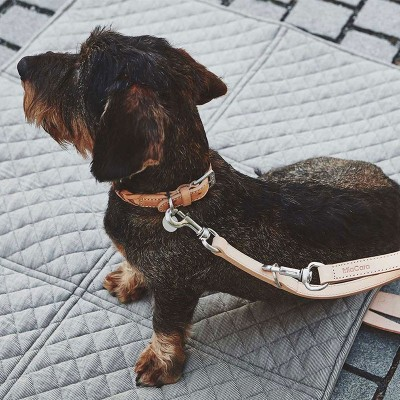 Collars and Leashes | Online Pet Supplies | ISA Project