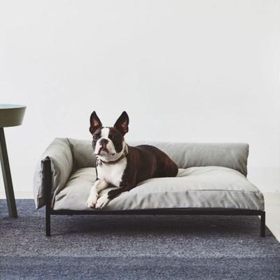 Cucce per animali | Amici a 4 zampe | ISA Project