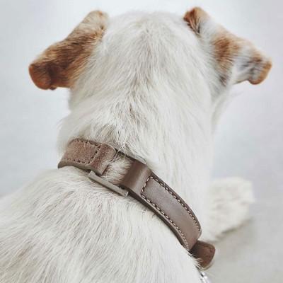 Collari | Accessori per Animali | Amici a 4 zampe | ISA Project